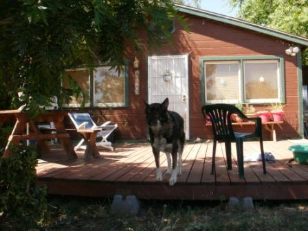 House Sitters Pictures from arkeller