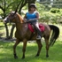 Picture 9 from sweetcitywoman Skilled Equestrian - housit in NJ