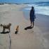 Picture 10 from wecare Sandy and Rosey, pocket poodle  Coffs sit.