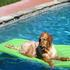 Picture 6 from thepetnanny Copper in the pool