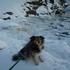 Picture 4 from HomeAngel4You Sole in Alaska