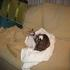 Picture 2 from MonarchButterfly Charlie and Willie in Washington