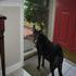 Picture 5 from MonarchButterfly Beau - Atlanta, Georgia