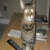 Picture 6 from MonarchButterfly Frisky - Atlanta, Georgia