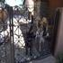 Picture 7 from MonarchButterfly Molly and Boomer