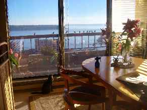 Profile picture for House Sitter BelltownMia