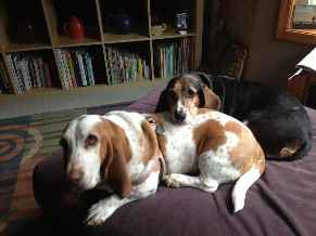 Profile picture for House Sitter  BassetSlaves