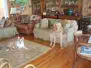 Profile Picture for Housesitter Required for House Sit tararosa