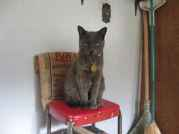 Profile Picture for Housesitter Required for House Sit Iquana