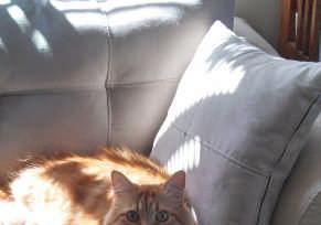Profile Picture for Housesitter Required for House Sit captainstevepdx