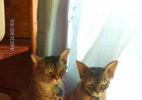 Profile Picture for Housesitter Required for House Sit Momof2Cats