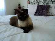 Profile Picture for Housesitter Required for House Sit Kingh999