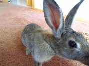 Profile Picture for Housesitter Required for House Sit michnickrabbit