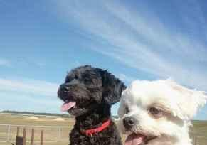 Profile Picture for Housesitter Required for House Sit twotravellers7