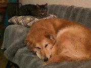 Profile Picture for Housesitter Required for House Sit eastmountainsadobe