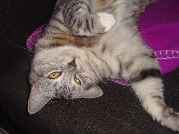 Profile Picture for Housesitter Required for House Sit Jorge_Mildred86