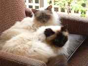 Profile Picture for Housesitter Required for House Sit yown12