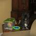 Picture 5 from thepetnanny Grumpy and the toy box