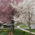 Front Yard in April