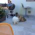 Terrace with Rocky and Simba