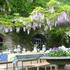 la piazetta with wisteria blossoming end of April/May