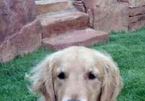 Profile picture for House Sitter lollyxoxo