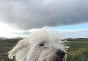 Profile picture for House Sitter Capesthorne