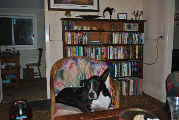 Profile Picture for Housesitter Required for House Sit Rustic8
